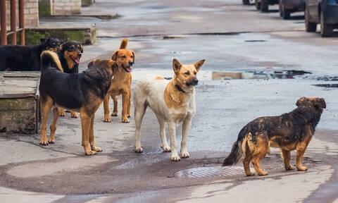 Αγέλη σκύλων επιτέθηκε σε περαστικό στα Μελίσσια (Πολύ σκληρές φωτογραφίες)