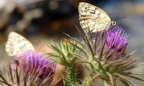 Τα έντομα αφανίζονται γιατί πρώτη φορά στην ιστορία τους συνάντησαν τον άνθρωπο