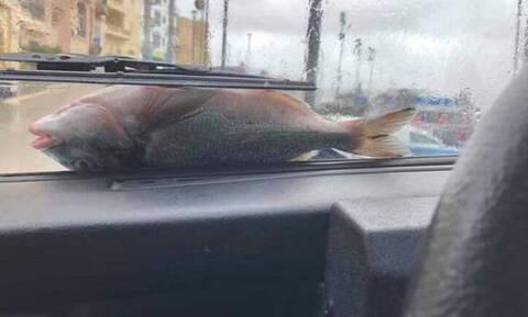 Εικόνες Αποκάλυψης στη Μάλτα: Έβρεξε χιλιάδες… ψάρια και ήταν ολοζώντανα