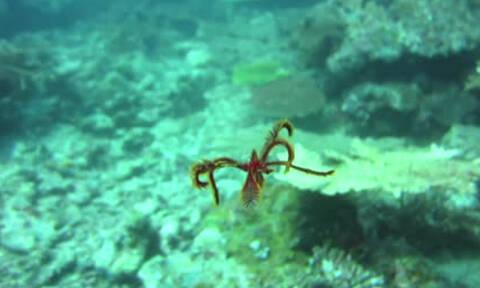 Δύτης καταγράφει το πιο... αλλόκοτο, αλλά πανέμορφο, θαλάσσιο πλάσμα (video)