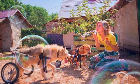 Χίλια μπράβο: Τα παράτησε όλα για να ανοίξει καταφύγιο ζώων!