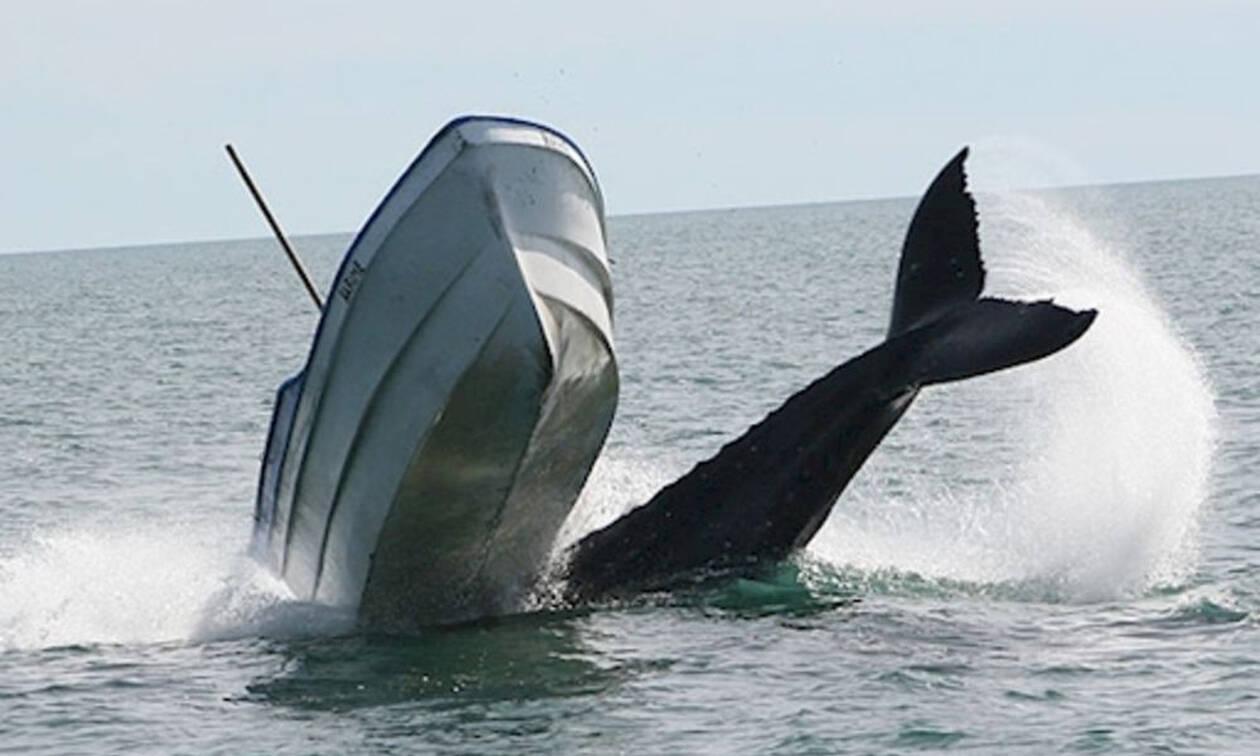 Τρόμος στα ανοιχτά: Όταν το «παιχνίδι» μίας φάλαινας βύθισε ένα ψαροκάικο (Pics)