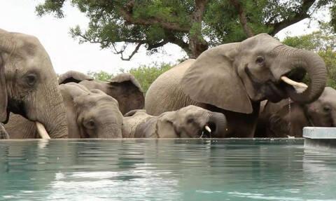 Ενοικοι ξενοδοχείου παθαίνουν... πλάκα με την επιδρομή διψασμένων ελεφάντων (video)