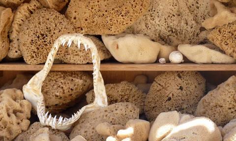 Κάλυμνος: Άγαλμα του σφουγγαρά στην Πλατεία Tarpon Spings (vid)