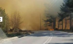 Συναγερμός στα Τρίκαλα: Μεγάλη φωτιά στην περιοχή Λογγιές