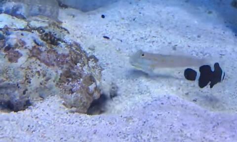 Επικό! Αυτό είναι το πρώτο bullying από ψάρι! (vid)