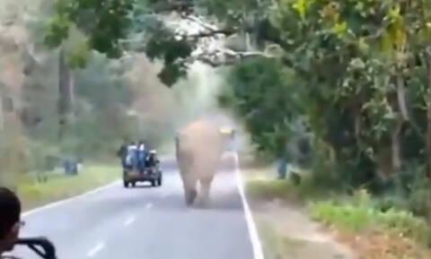 Άγριος ελέφαντας επιτέθηκε σε τουρίστες, γλίτωσαν την τελευταία στιγμή (vid)