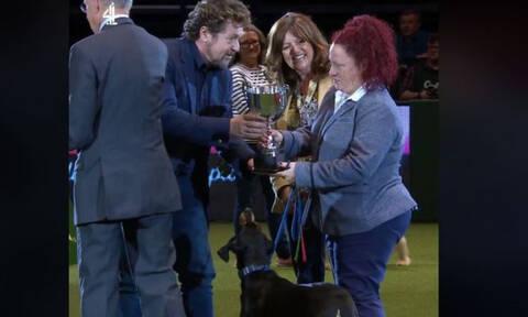 Собака с Кипра стала чемпионом крупнейшей выставки собак «Crufts»