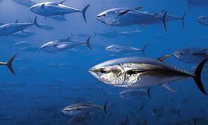 Δεν έχεις διαβάσεις ΠΙΟ τρομακτική έρευνα για τα ψάρια