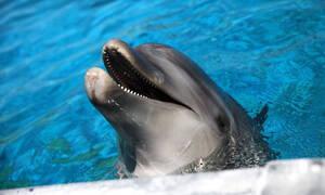 Το ήξερες; Υπάρχει συνήθεια των ανθρώπων που την έχουν και τα δελφίνια!