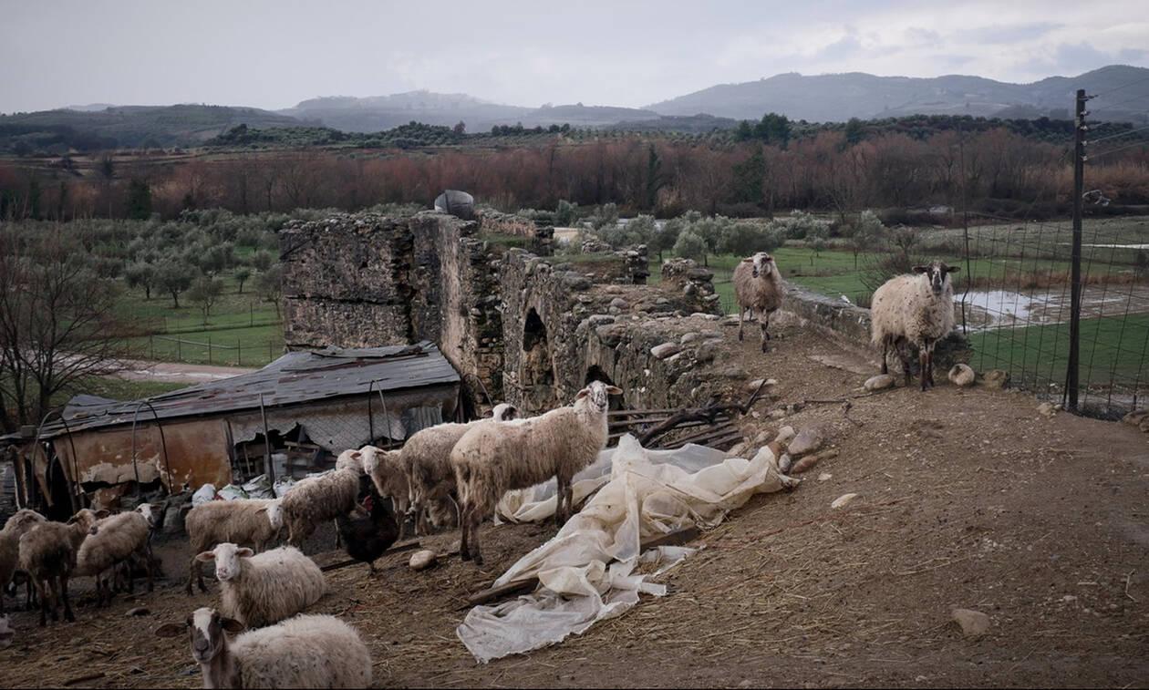 Χανιά: Παραδόθηκε ο κτηνοτρόφος που κατηγορείται ότι πυροβόλησε άλλον κτηνοτρόφο