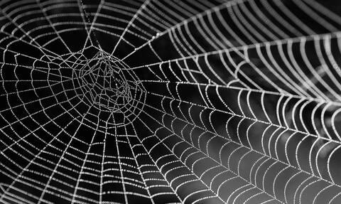 Αυτή είναι η αράχνη που το δηλητήριό της προκαλεί 4ωρη στύση (pic+vid)