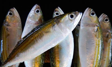 Προσοχή: Όταν μασάς ψάρι αυτό το μέρος να το τρως ΠΑΝΤΑ!