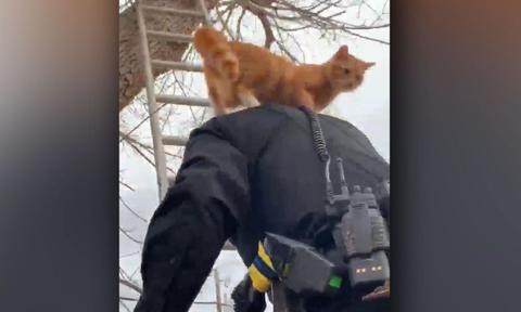 Αστυνομικός ανεβαίνει σε δέντρο για να σώσει μια γάτα. Η αντίδρασή της είναι απίστευτη (video)