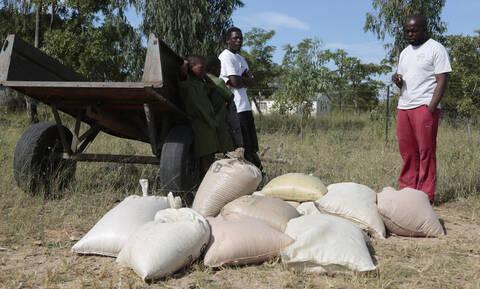 Φονικό το πέρασμα του κυκλώνα Ιντάι στη Ζιμπάμπουε: Τουλάχιστον 31 νεκροί - Δεκάδες αγνοούμενοι