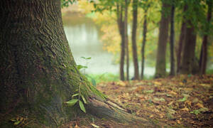 ΣΟΚ: Νεκρός σε δάσος γνωστός παίκτης reality - Ήταν μόλις 26 ετών (pics)