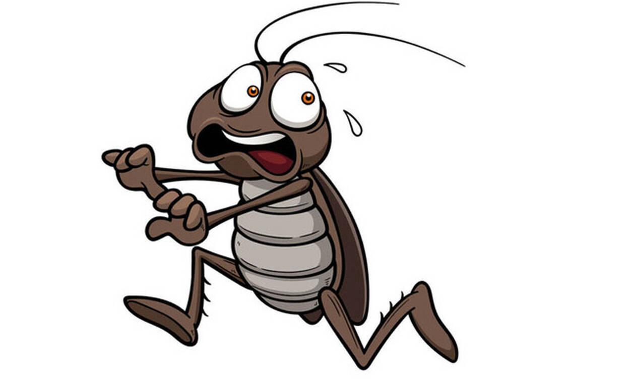 Με αυτόν τον τρόπο δεν θα σε ξαναπλησιάσει ΠΟΤΕ κατσαρίδα! (pics)