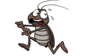 Με αυτόν τον τρόπο δεν θα σε ξαναπλησιάσει ΠΟΤΕ κατσαρίδα!