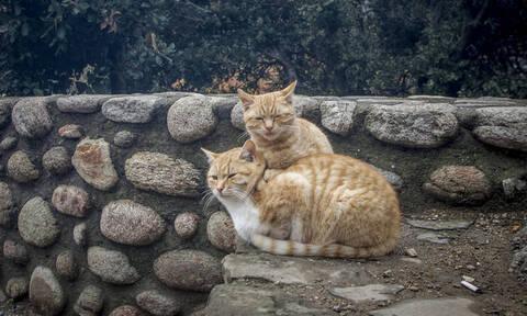 Οργή στην Κρήτη: Δίνει συνταγή φόλας για γάτες μέσω facebook