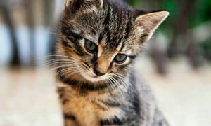Αυτό το ατρόμητο γατάκι που παίζει με την ηλεκτρική σκούπα θα φτιάξει τη μέρα σου