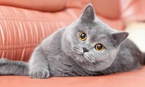 Οι 10+1 πιο ακριβές γάτες σε όλο τον πλανήτη