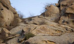 Τρομερό καμουφλάζ: Θα μπορούσατε να δείτε τις κρυμμένες λεοπαρδάλεις πριν σας κατασπαράξουν; (Pics)