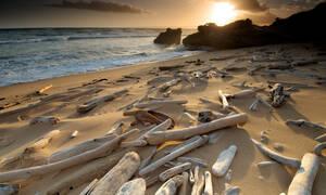 Τους «κόπηκαν τα πόδια»: Αυτό που είδαν στην ακτή δεν ήταν τελικά ξύλο...