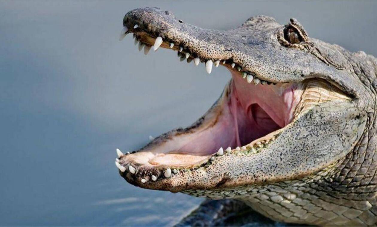 Ιδού η απορία: Μπορείς να ξεχωρίσεις έναν κροκόδειλο από έναν αλιγάτορα;