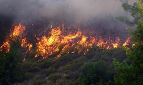 Φωτιά ΤΩΡΑ: Μεγάλη πυρκαγιά στο Νεοχώρι Μυτιλήνης