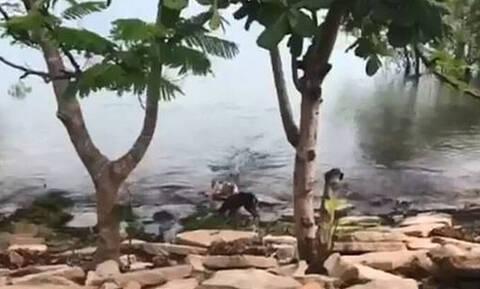 Οργή για το βίντεο που σόκαρε τον πλανήτη: Κροκόδειλος κατασπαράζει σκύλο που παίζει σε όχθη ποταμού