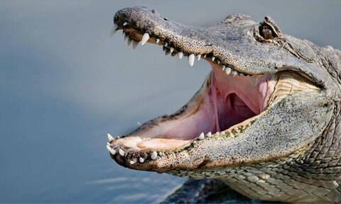 Κροκόδειλος ή αλιγάτορας; Καταλαβαίνεις τη διαφορά; (pics)