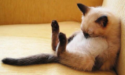 Τρομακτικό: Τι κάνουν οι γάτες μας όσο εμείς κοιμόμαστε; (pics)