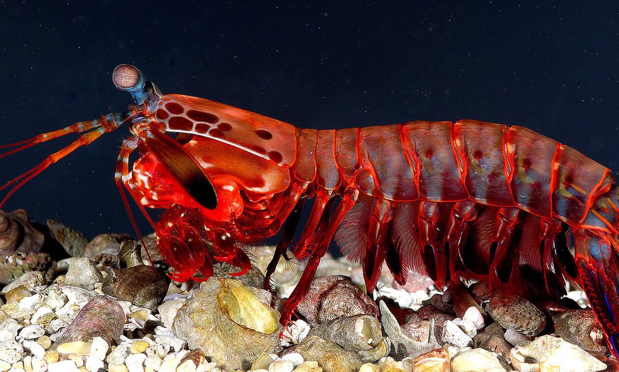 Θαύματα της φύσης! Αυτά είναι τα πέντε πιο παράξενα πλάσματα στον κόσμο! (pics)