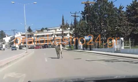 Πρωτοφανείς εικόνες στη Θεσσαλονίκη: Άλογο έκοβε βόλτες στο δρόμο (vid)