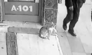 Η πιο τρελή γάτα του κόσμου: Δεν φαντάζεστε τι κάνει ΜΟΝΟ σε σκύλους και άντρες! (video)