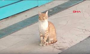 Ο «φόβος» της Κωνσταντινούπολης: Αυτή είναι η πιο τσαντισμένη γάτα στον πλανήτη