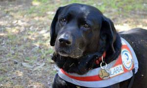 Πέθανε η Λάρα, ο πρώτος σκύλος οδηγός τυφλών στην Ελλάδα (pics)