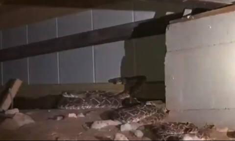 Φρίκη: Δεν φαντάζεστε τι βρήκε όταν έψαξε στο υπόγειο του σπιτιού του