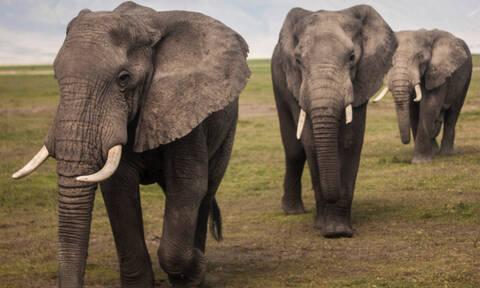 Αυτά τα δύο ελεφαντάκια έγιναν viral για τον πιο απίθανο λόγο