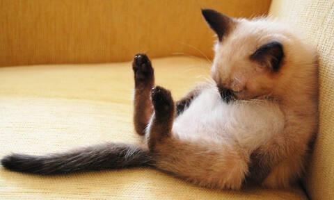 Η πιο τρομακτική γάτα που έχεις δει ποτέ σου! (pics)