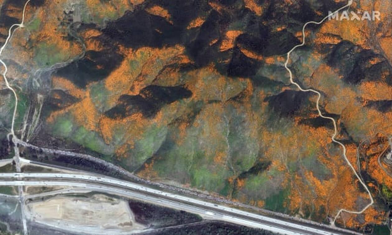 Θαυμαστή ομορφιά: Οι άγριες παπαρούνες της Καλιφόρνια προσελκύουν χιλιάδες επισκέπτες (pics)