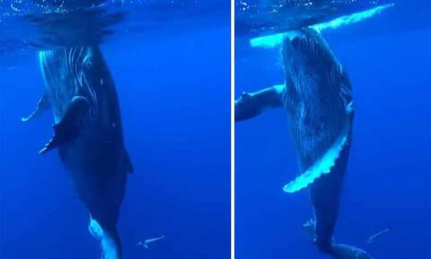 Έκανε βουτιά πάνω σε μια φάλαινα! Τη συνέχεια δεν θα την πιστεύετε! (pics+vid)