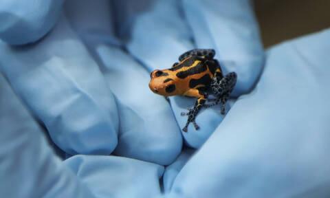 Μύκητας – φονιάς σπέρνει το θάνατο - Απειλεί με αφανισμό τα ζώα στην Ευρώπη