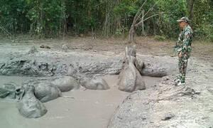 Η αγωνιώδης επιχείρηση διάσωσης για έξι ελεφαντάκια - Δείτε το βίντεο