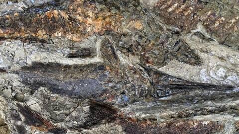 Ανακαλύφθηκαν απολιθώματα από τη μέρα της «Αποκάλυψης» πριν 66 εκατ. χρόνια (pics)
