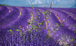Γαλλία: Ταξιδεύοντας στην ορεινή Προβηγκία - Πώς θα απολαύσετε το τοπίο χωρίς να ταλαιπωρηθείτε