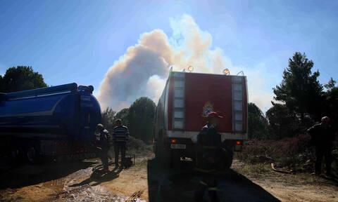 Μεγάλη φωτιά στην Ηλεία: Καίγεται το δάσος της Στροφυλιάς (pics&vid)