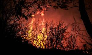 Μαίνεται η πυρκαγιά στο προστατευόμενο δάσος της Στροφυλιάς (pics&vid)