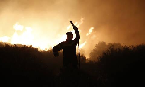 Στάχτη το προστατευόμενο δάσος της Στροφυλιάς - Συνεχίζεται η «μάχη» με τις φλόγες (pics&vid)