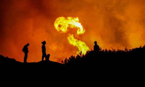 Ηλεία: Εικόνες που συγκλονίζουν από τη φωτιά στο δάσος της Στροφυλιάς